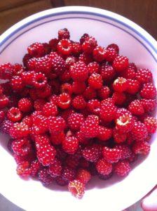 2013 Raspberry Garden